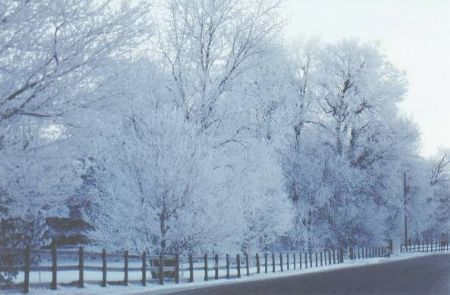 snowylane.jpg
